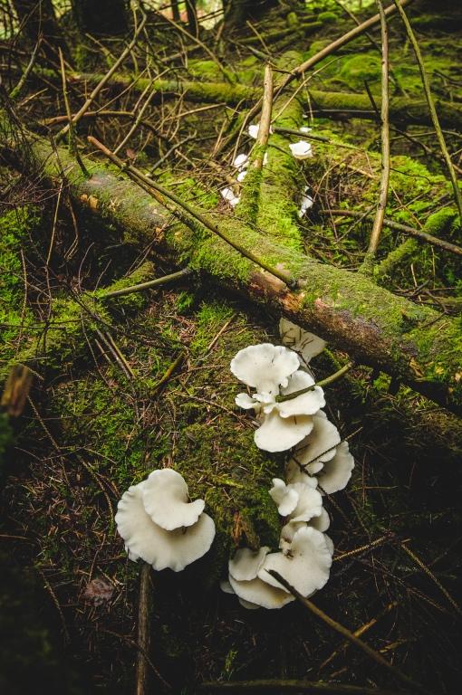 fungus-1