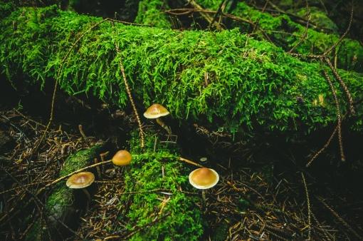 fungus-2